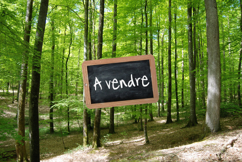 foret-a-vendre