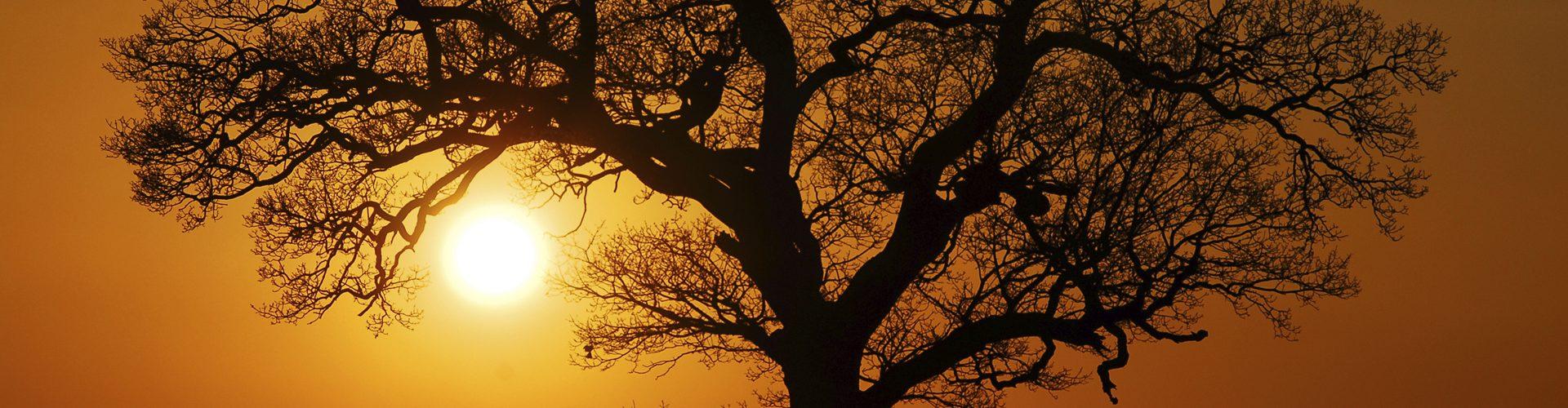 arbre-champetre