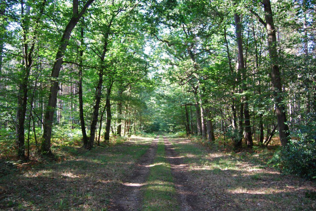 vente propriete forestiere
